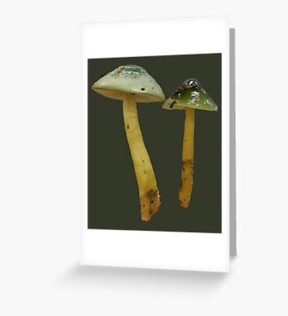 parrot wax-cap photograph Greeting Card
