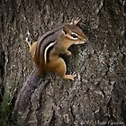 Eastern Chipmunk  by Marie  Cardona