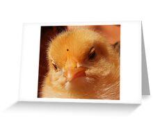 Baby chicken Greeting Card