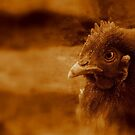 Chicken Dream by Sorin  Reck