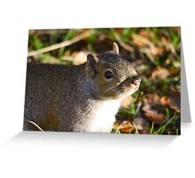 Cute Squirrel saying hello Greeting Card
