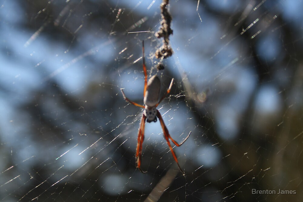 Orb Spider by Brenton James