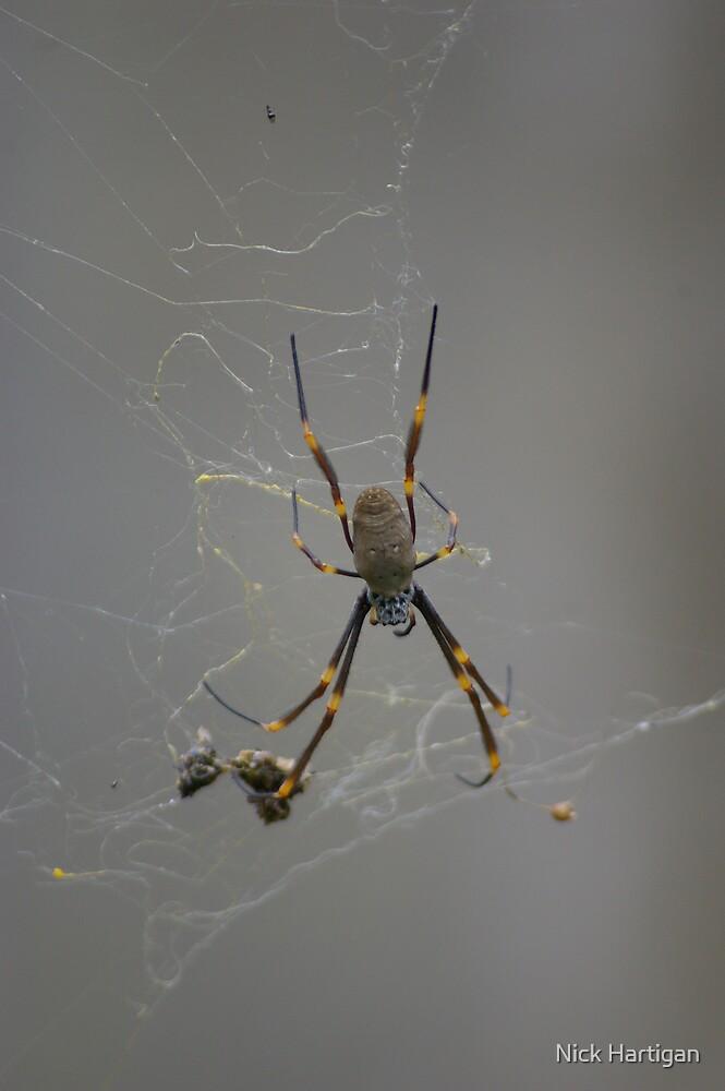 Spider by Nick Hartigan