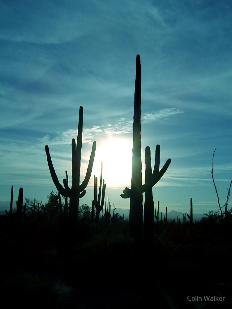 Saguaro Sun by Colin Walker