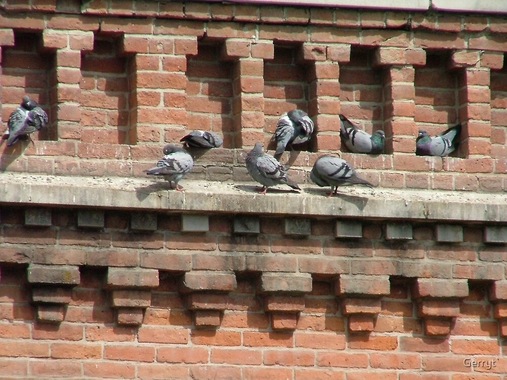 Pigeon Holes by Gerryt