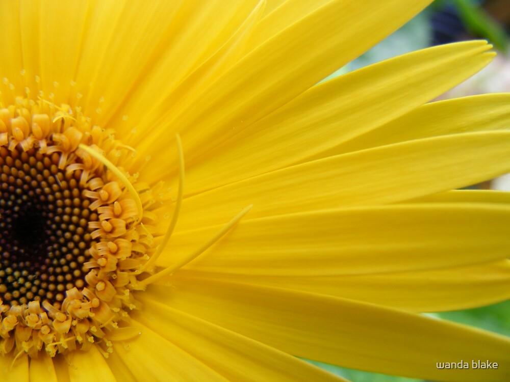 yellow gerber by wanda blake