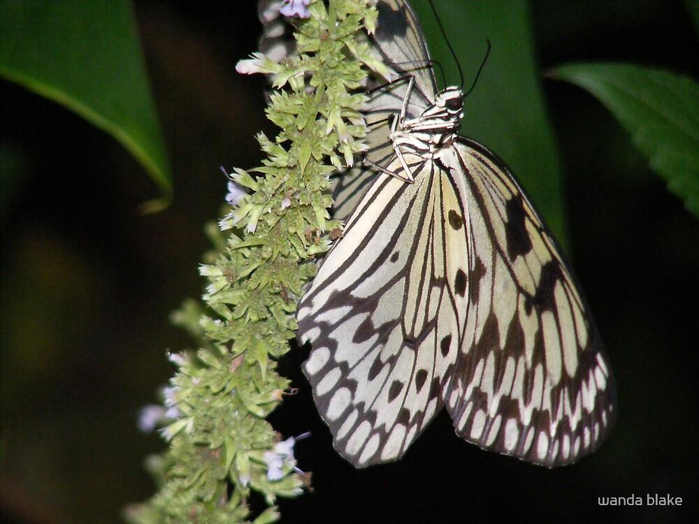 flutterby by wanda blake