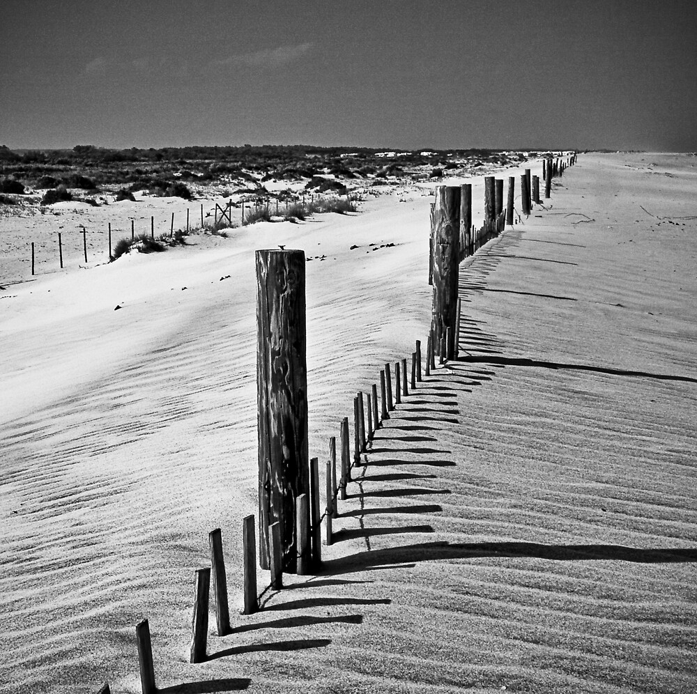 Dune and Fence by Michael Mancini