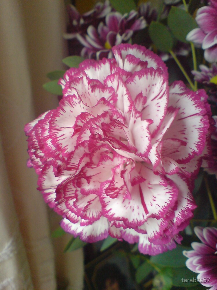 Carnation from the Bouquet by tarabas57