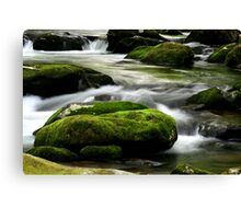 Mossy River Rocks Canvas Print