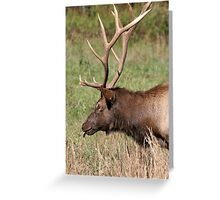 Elegant Elk Greeting Card