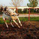 Gone Wild by Catalin Soare