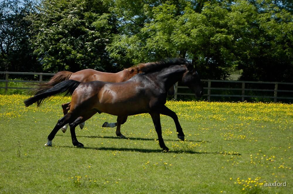 Running Wild by aaxford