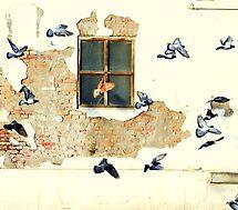 Window shopping by Alan Mattison