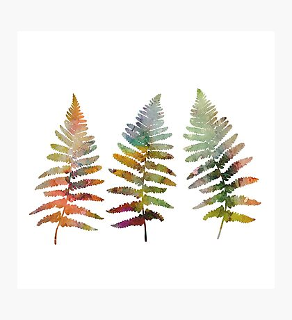 Watercolor fern leaves Photographic Print