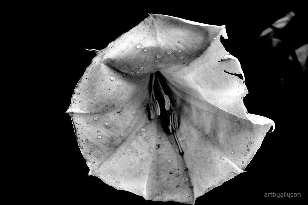 Black and white photo - Moonflower by Allyson Kitts
