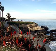 La Jolla Cove by Scott  Remmers