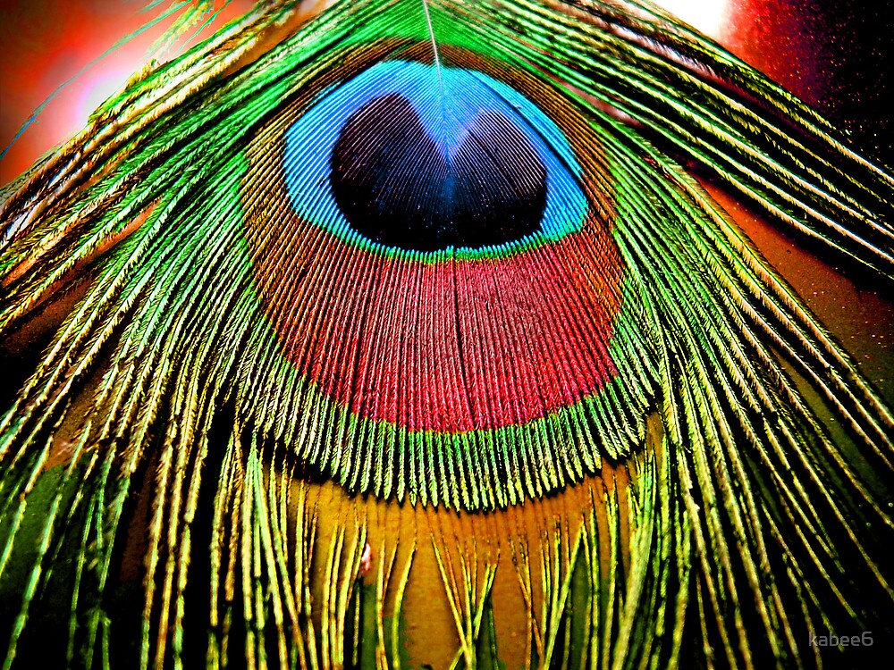 feather eye by kym banks
