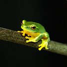 Froggy by Evan Malcolm