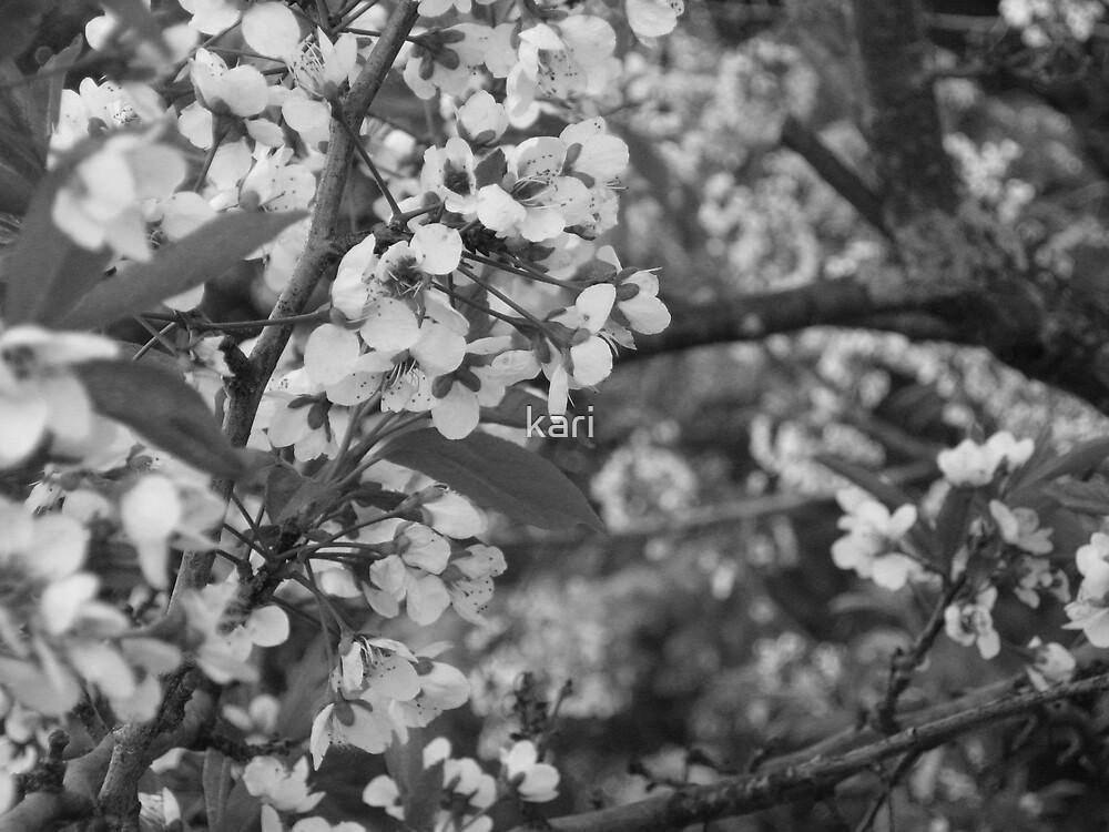 Flowering crab tree...black and white by kari