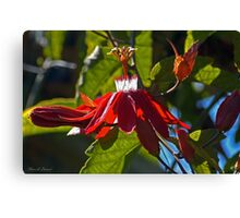 Mary Jane Passiflora Canvas Print