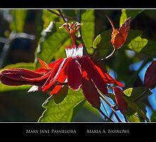 Mary Jane Passiflora - Cool Stuff by Maria A. Barnowl