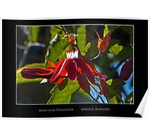 Mary Jane Passiflora - Cool Stuff Poster