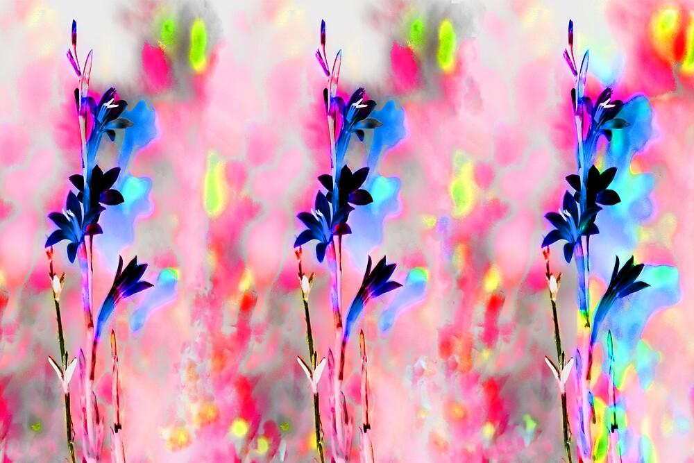 watsonia by alistair mcbride