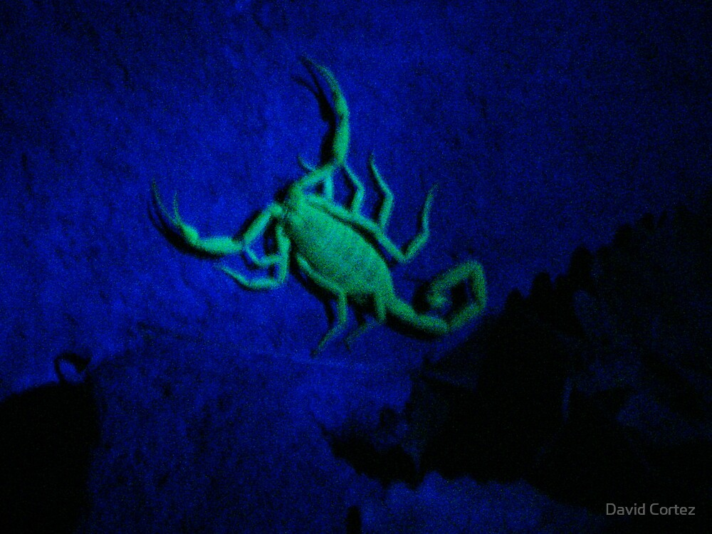 Scorpion by David Cortez