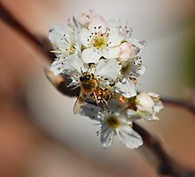 Busy bee by David  Hall