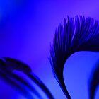 Blue quail by lox83