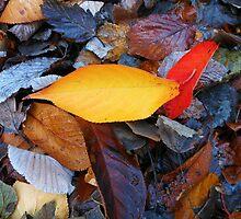 Fallen Leaves by SunriseRose