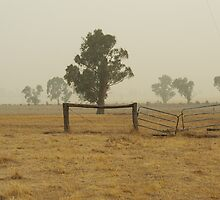 Bushfires in Southern NSW by Rodney  Roughan