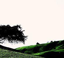 The Cedar Of South Gippsland by Michael Kienhuis
