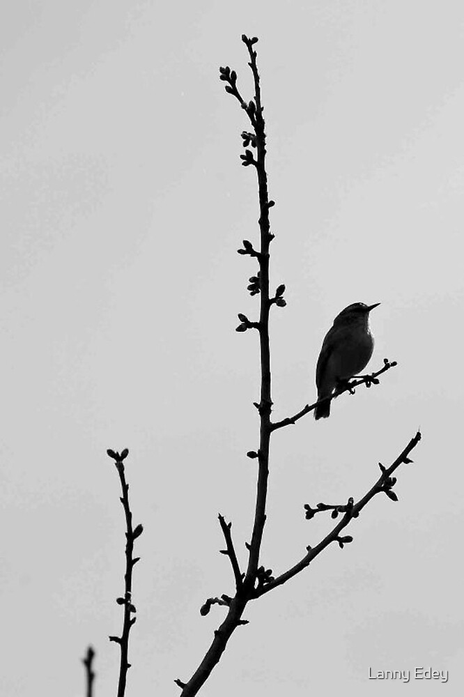 Lonely Bird by Lanny Edey