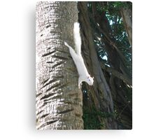 MOTHER NATURE AT HER BEST 6 Canvas Print
