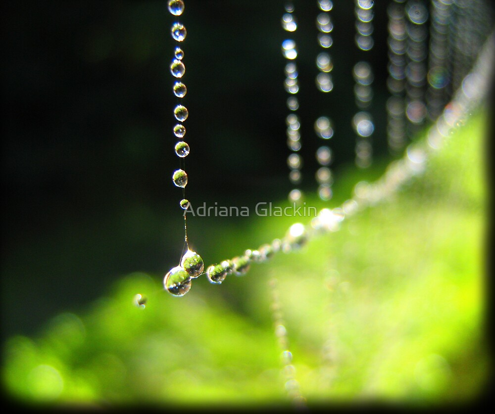 September Rain by Adriana Glackin