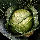 Cabbage by Yampimon