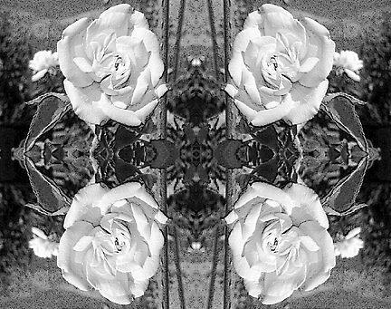 Desert Roses by dreamwalker