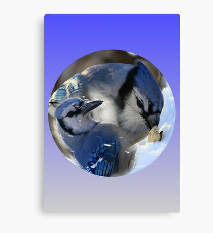 Blue Jays In a Ball Canvas Print