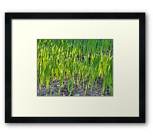 Morning Grass Framed Print