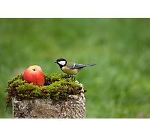 Great tit and a red apple Photographic Print