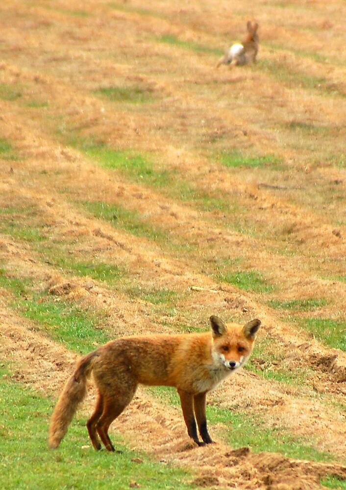 Run, Rabbit, Run by DaveP
