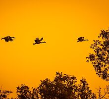 Sunset Flight by Russell Charters