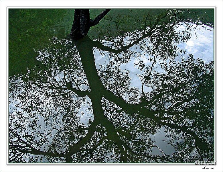 Upside down by aksircar