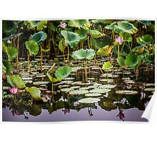 Water Lilies Yellow Water Poster