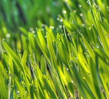 Morning Grass 4 by AnnArtshock
