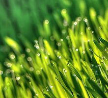 Morning Grass 5 by AnnArtshock