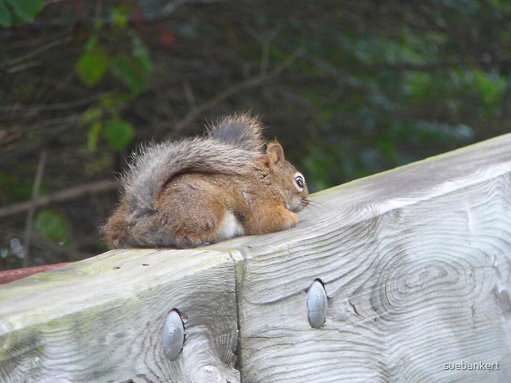 Squirrel by suebankert