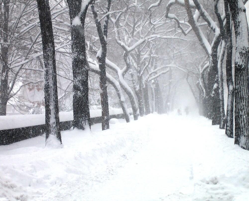 Central Park  by Nikolay  Dimitrov